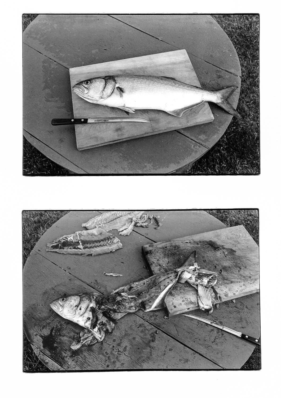 Horan-28-bluefish.jpg