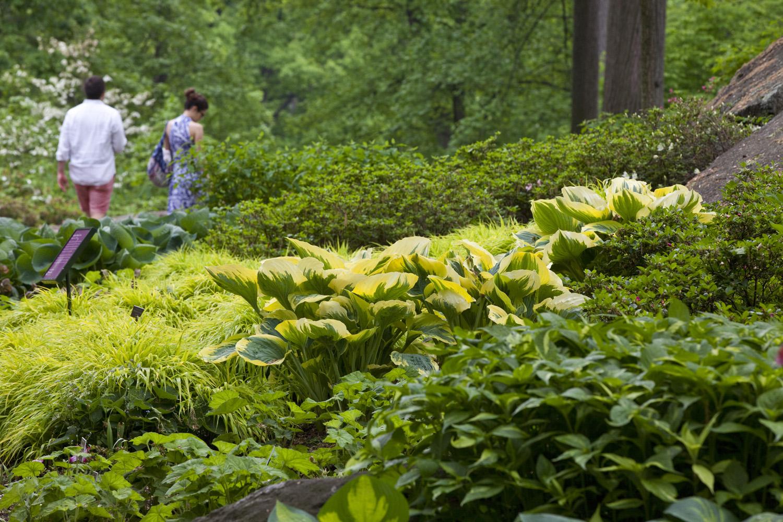 New York Botanical Garden, Bronx NY