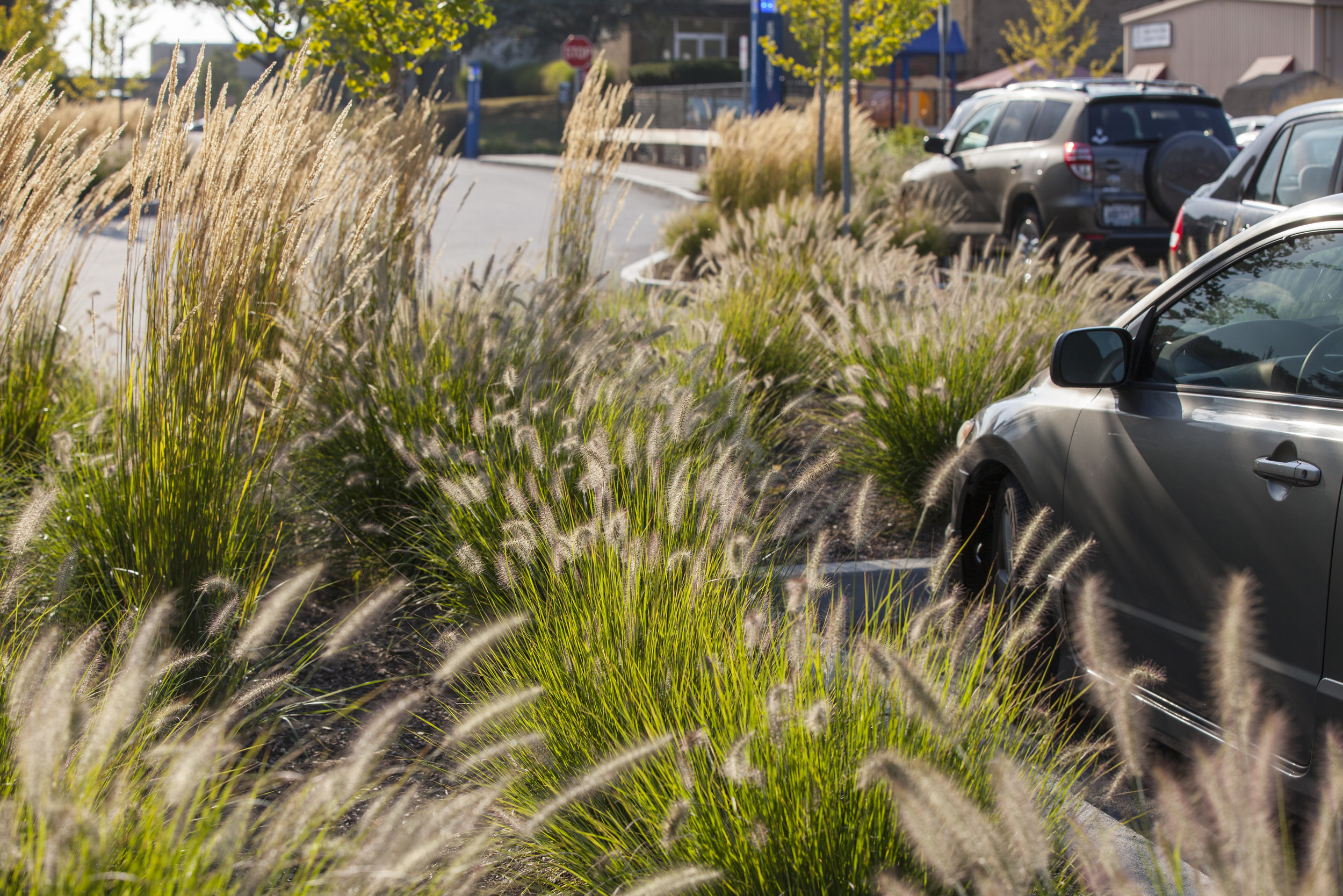 parking, Rhode Island College, Providence RI - Traverse Landscape Architects