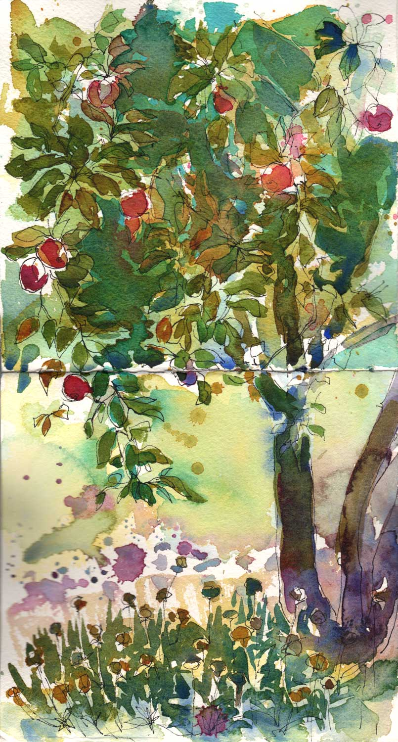 Apple Tree. Watercolor and ink on watercolor paper.