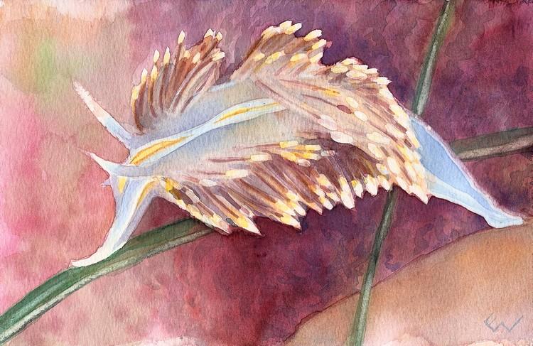 hermissenda-the-nudibranch.jpg
