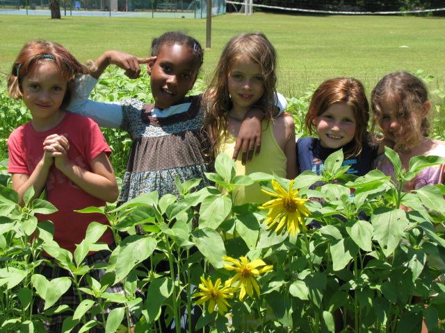 sunflower girls1.jpg