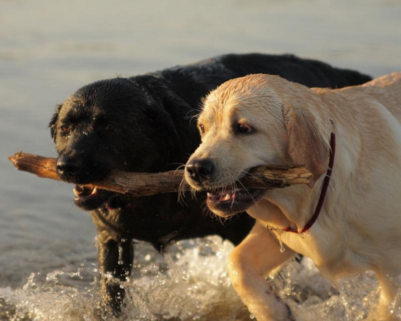 dog beach117.jpg