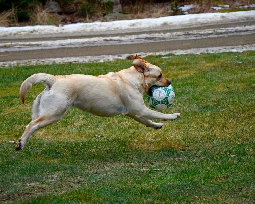 Hooda Ball 3.jpg
