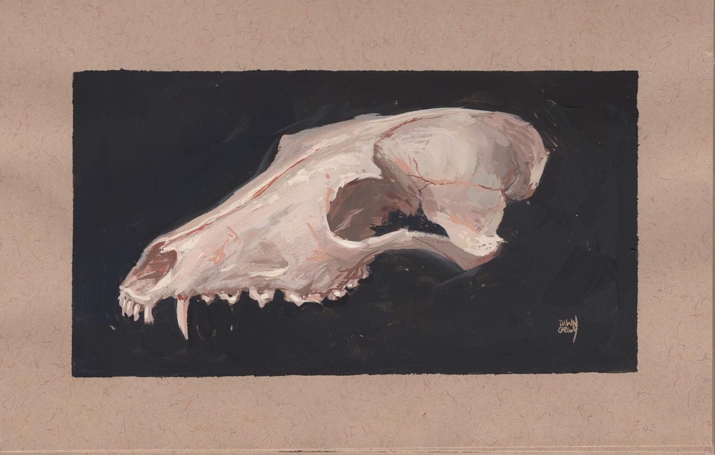 """""""Red Fox Skull in Gouache"""" Gouache on Toned Paper"""