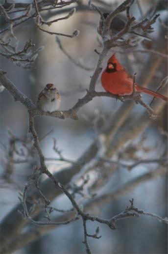 garden with birds in winter