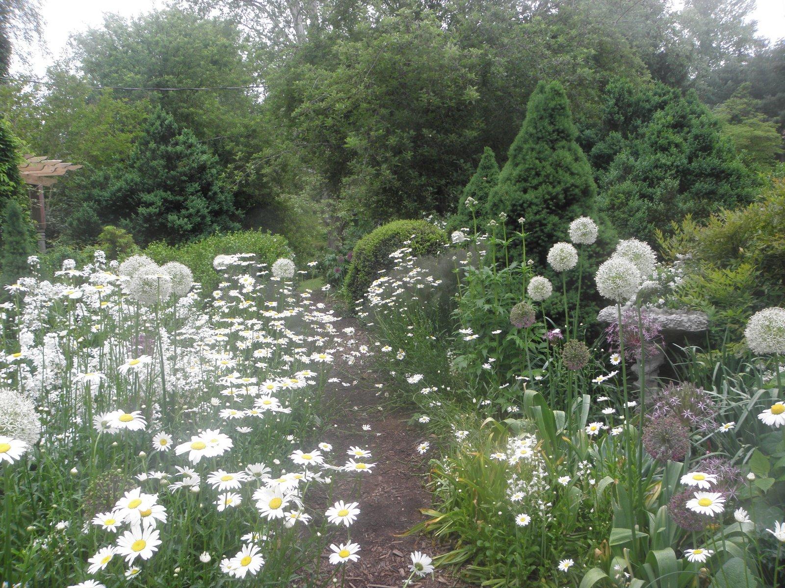 flowers along garden path