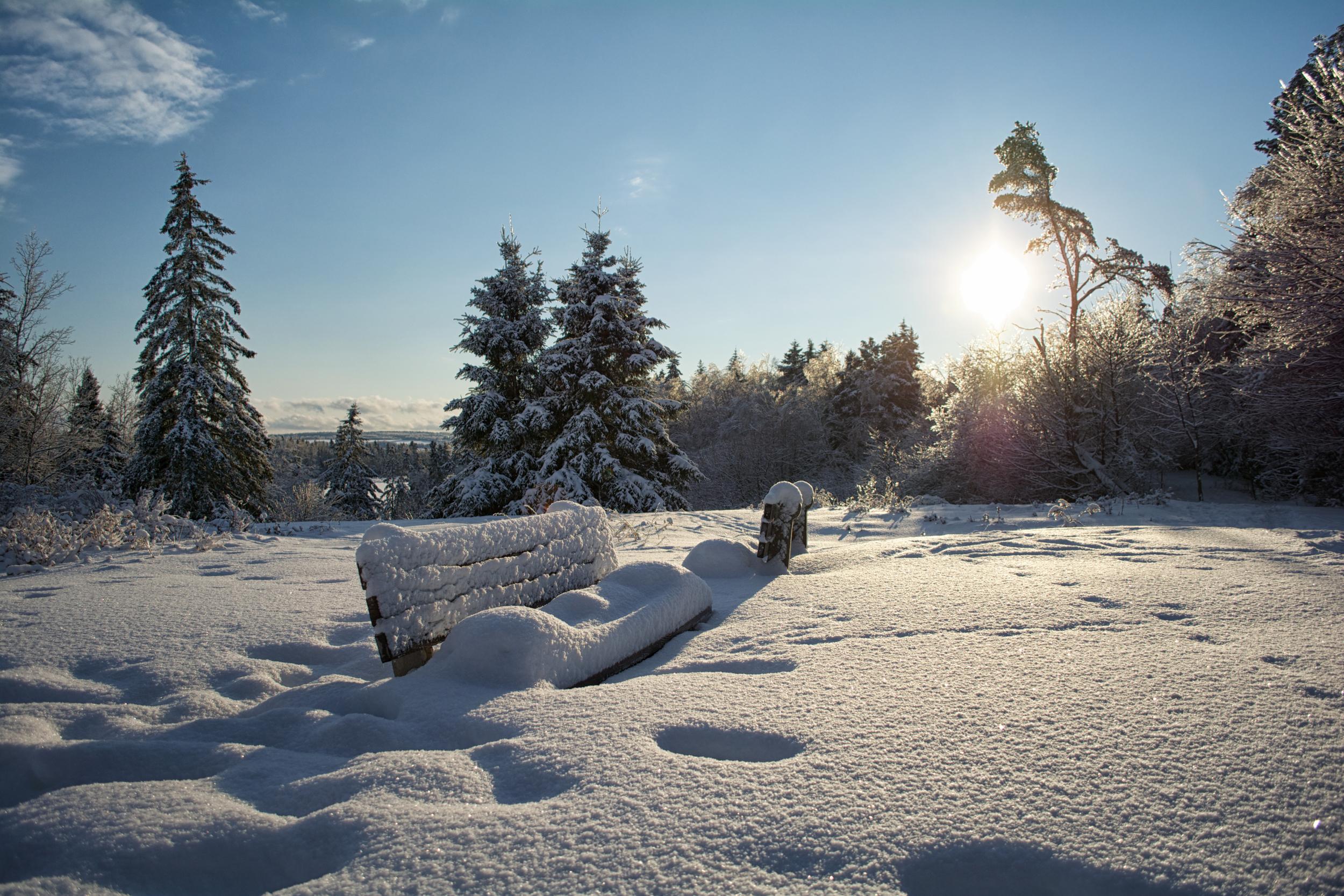 Benches under snow