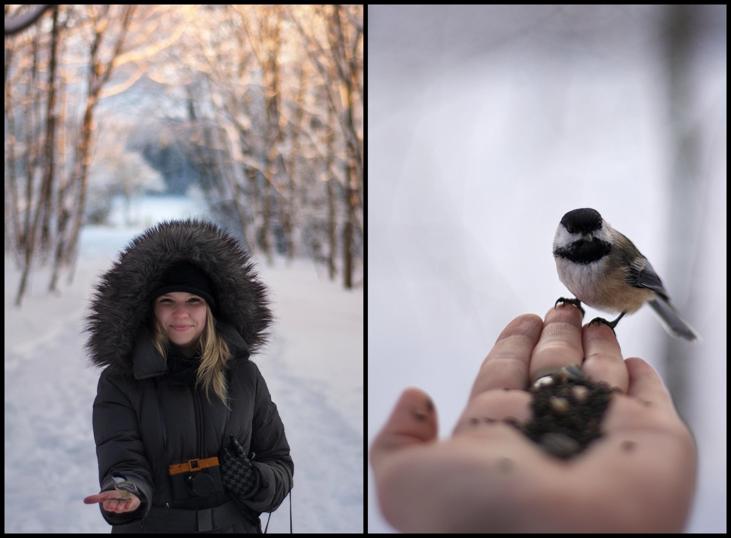 Bird Sanctuary Diptic.jpg