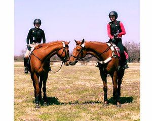 Learning is best accomplished when one is having fun. The horses too!