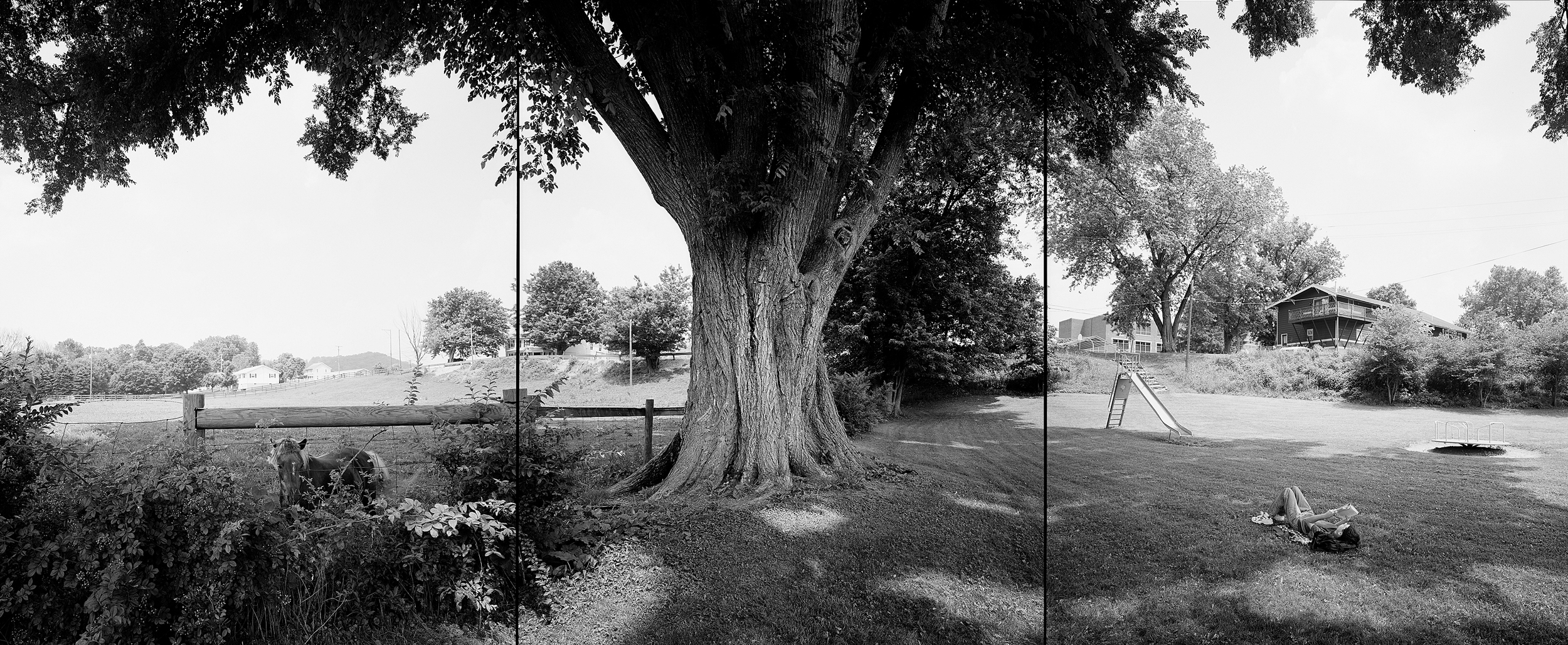 Slippery elm, Ohio, 2002