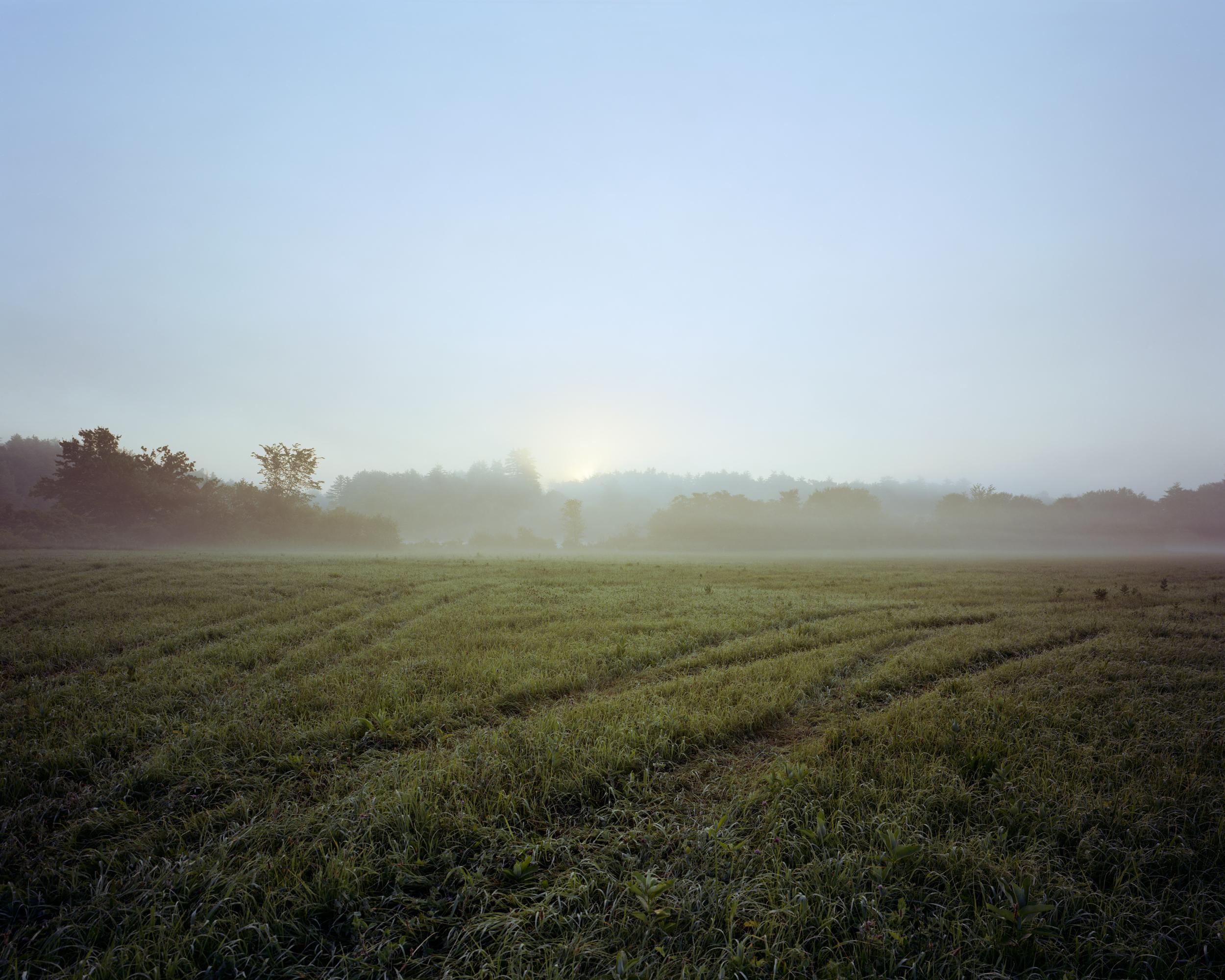 03-411 Meadow, sunrise, tractor tracks in grass, full.jpg