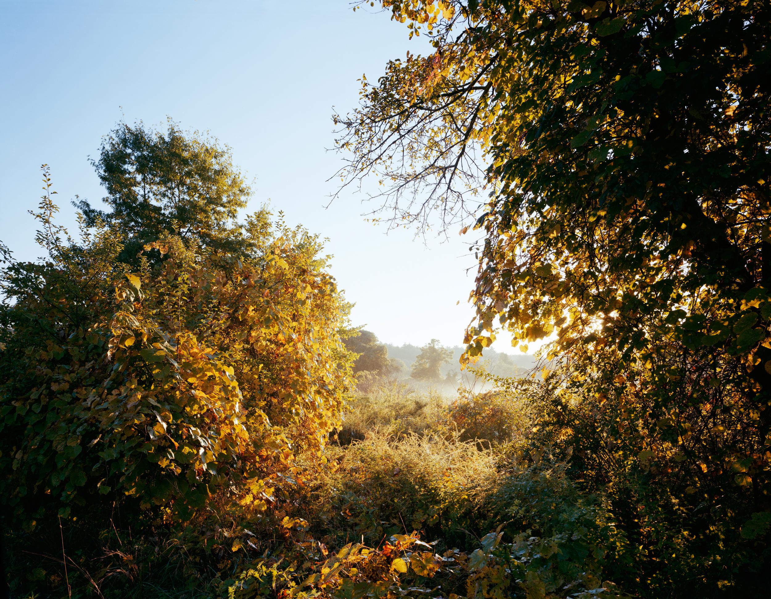03-536 Meadow, full.jpg