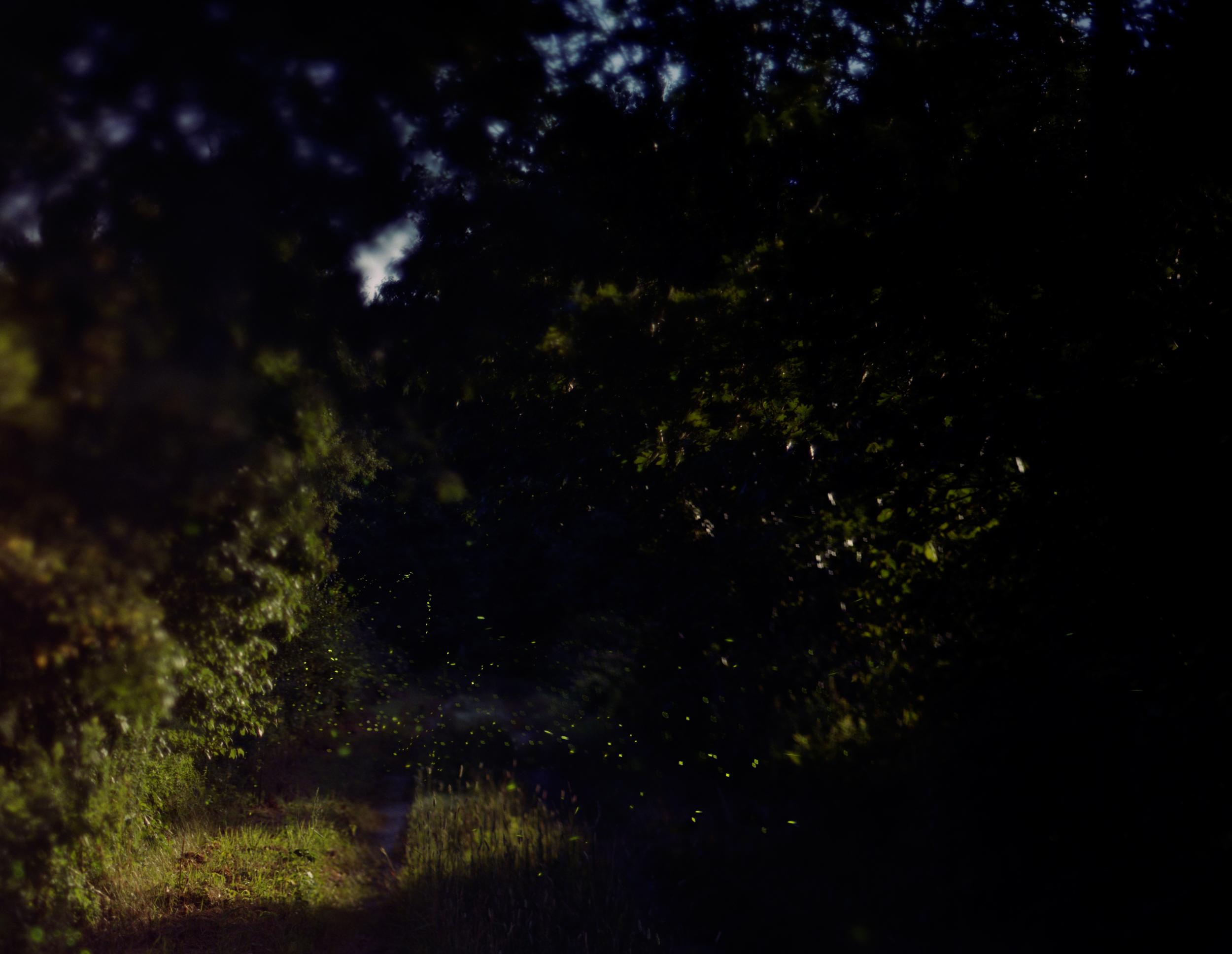 07-92 Fireflies, full.jpg