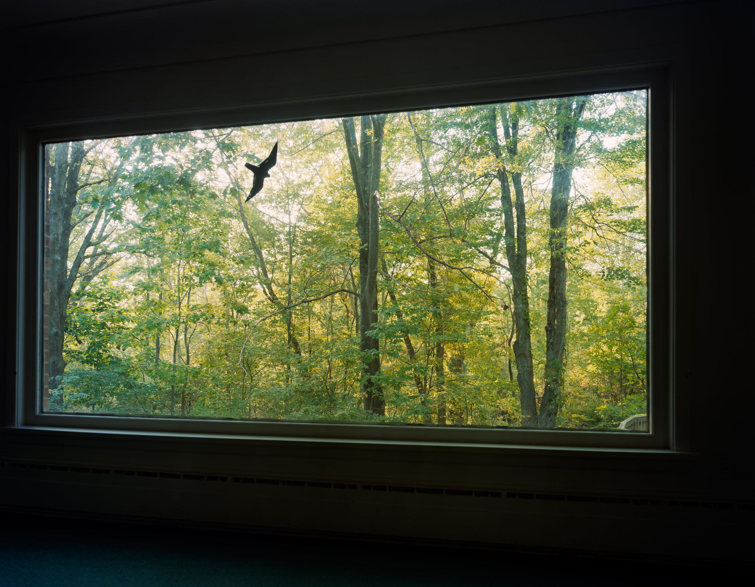 08-372 View from the Living Room, web.jpg