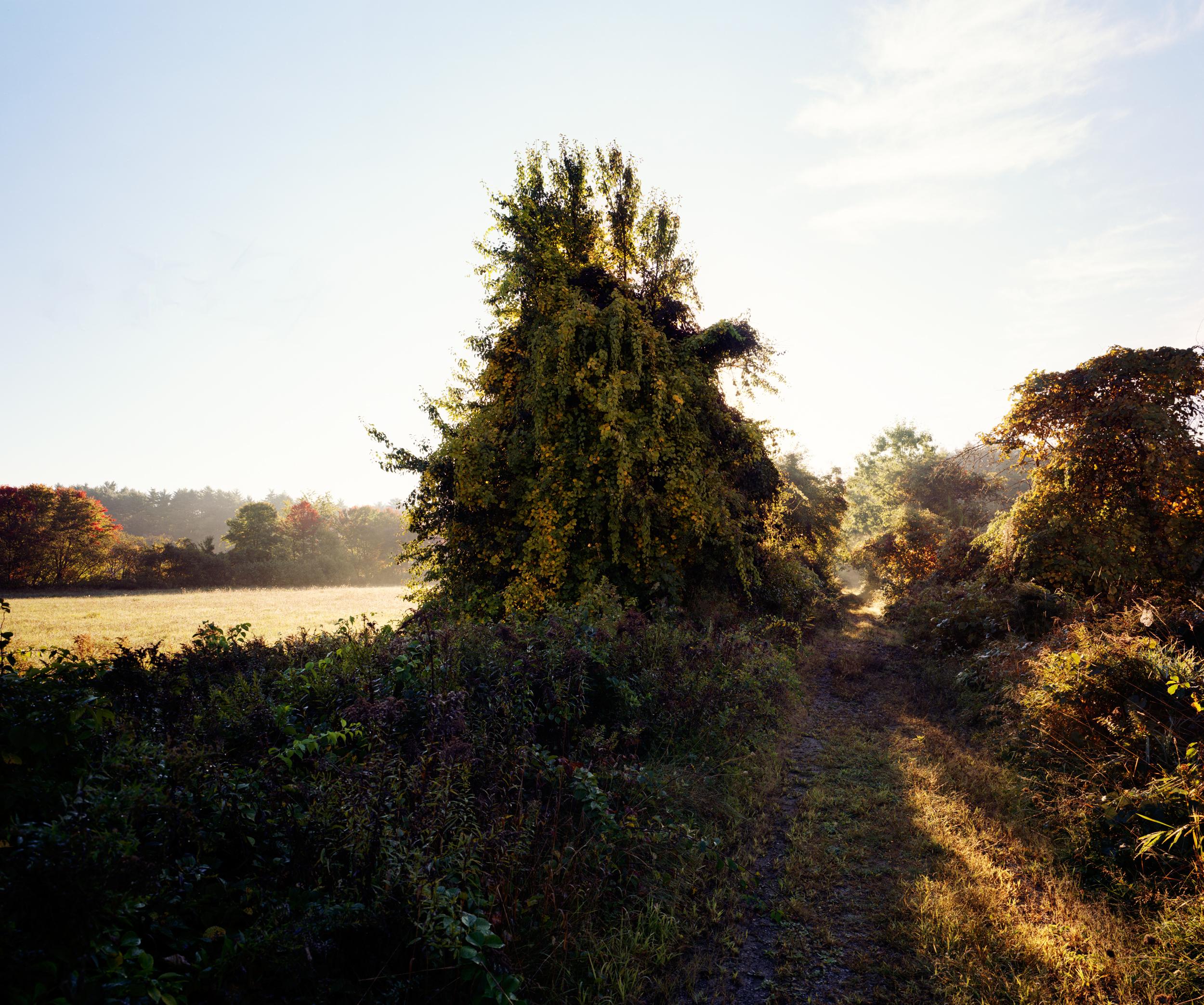 04-385 Meadow lane, from CS, web.jpg