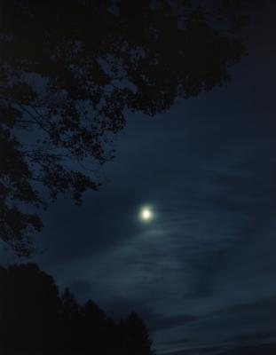 08-440 Full moon and tree.jpg