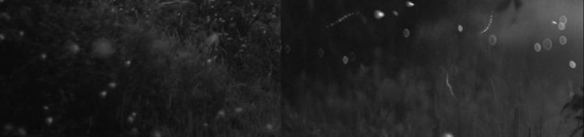 Fireflies Pan1.jpg