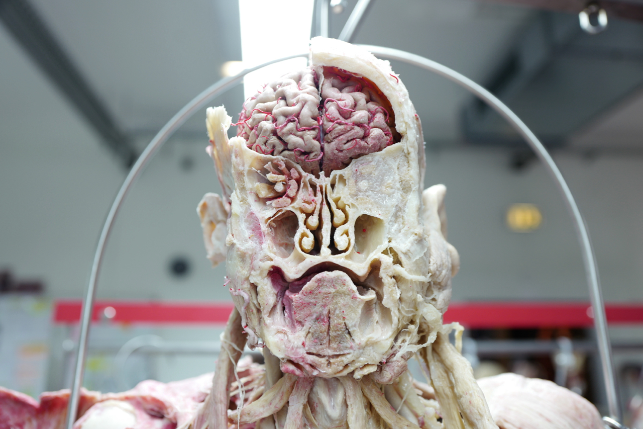 guben_mark_benecke_forensik_training_2018_body_worlds_plastinarium_kurs - 2.jpg