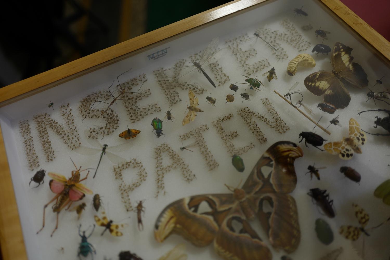 mark_benecke_mfn_museum_naturkunde_berlin_alexander_von_humboldt_papagei_L1010060.JPG