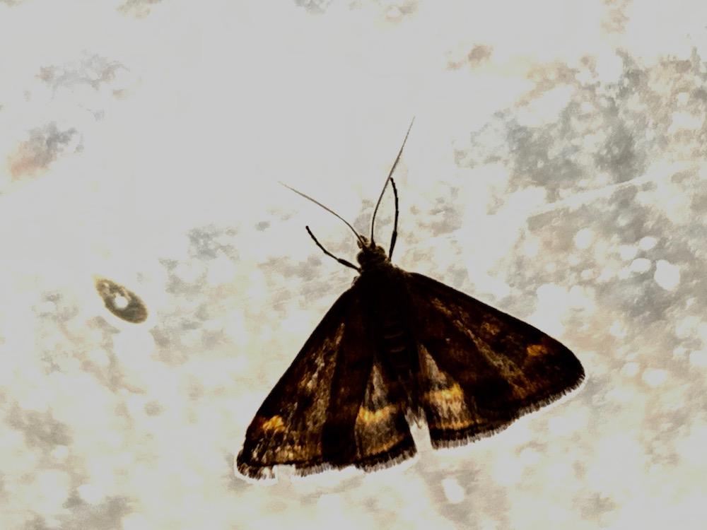 mark_benecke_forensic_summer_training_entomology_plastination_body_worlds - 10.jpg