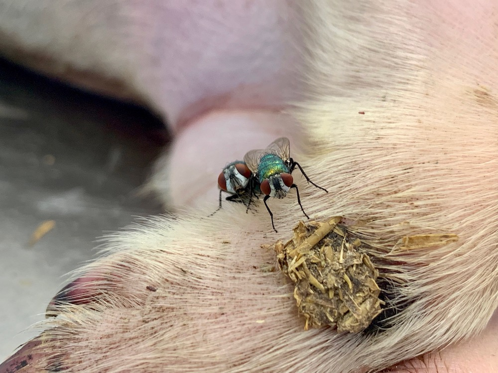 mark_benecke_forensic_summer_training_entomology_plastination_body_worlds - 11.jpg