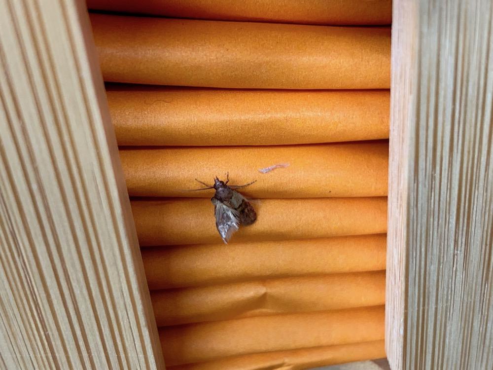 mark_benecke_forensic_summer_training_entomology_plastination_body_worlds - 28.jpg