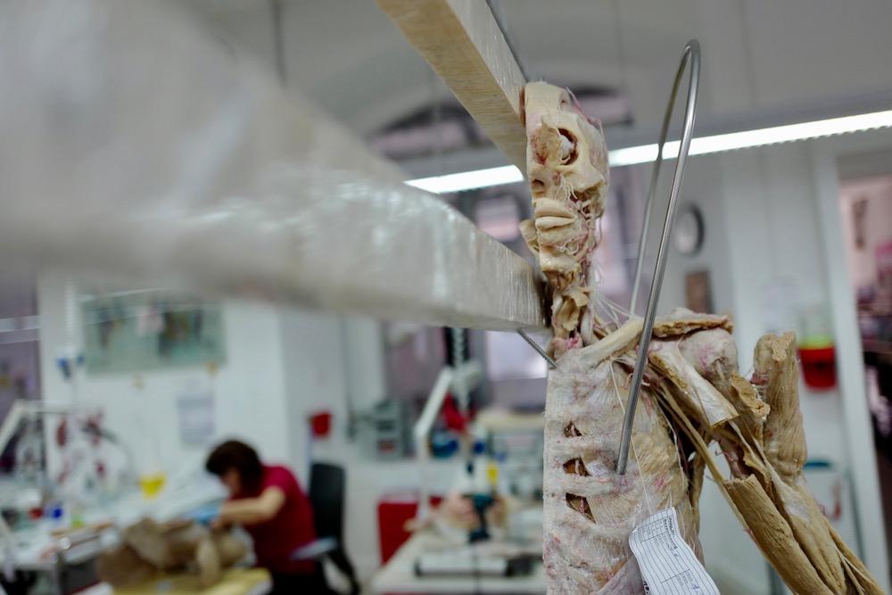 mark_benecke_forensic_summer_training_entomology_plastination_body_worlds - 40.jpg