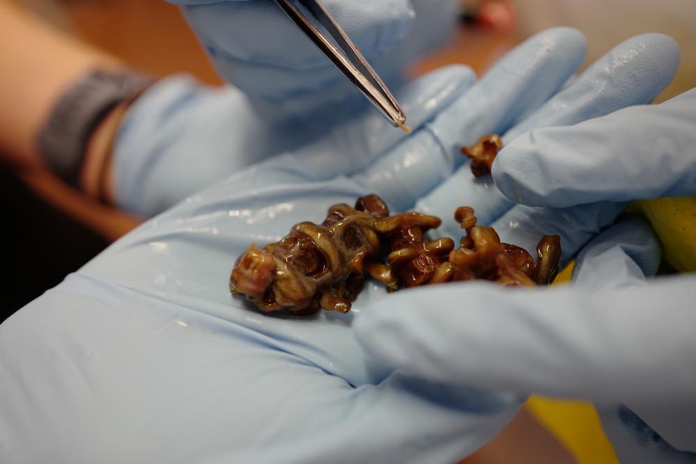mark_benecke_forensic_summer_training_entomology_plastination_body_worlds - 160.jpg