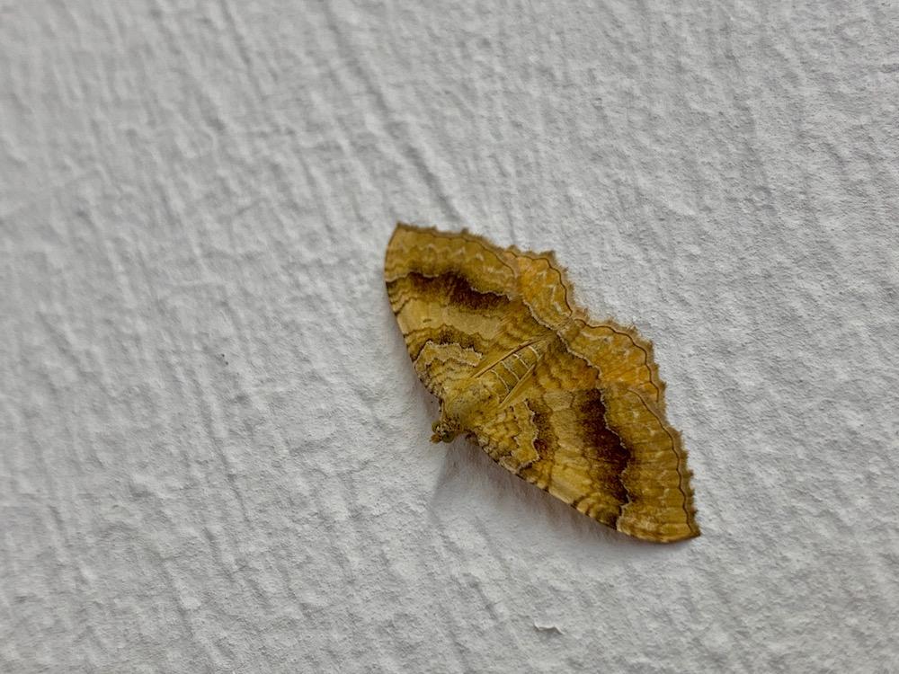 mark_benecke_forensic_summer_training_entomology_plastination_body_worlds - 170.jpg