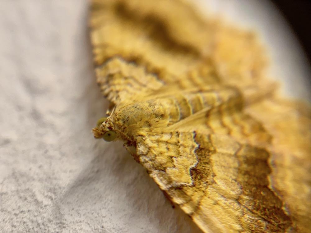 mark_benecke_forensic_summer_training_entomology_plastination_body_worlds - 171.jpg