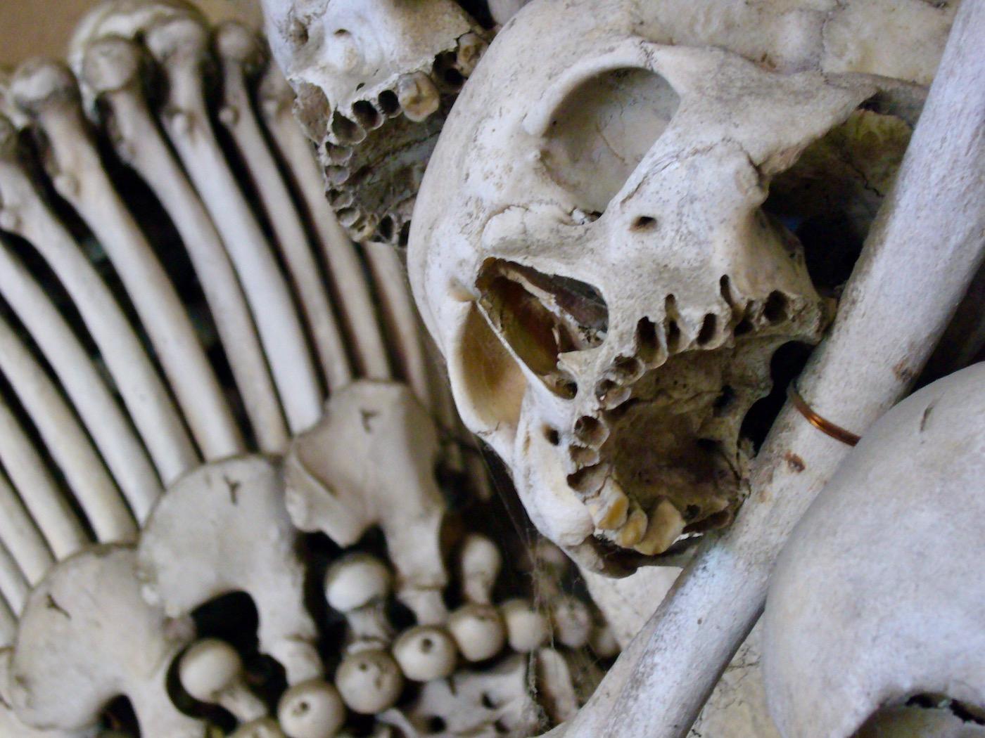 mark_benecke_kutna_hora_sedlec_prag_prague_ossuary_ossuarium - 104.jpg