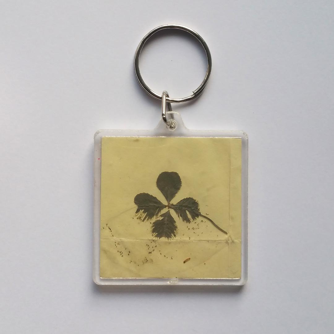 Four-leaf Clover :)