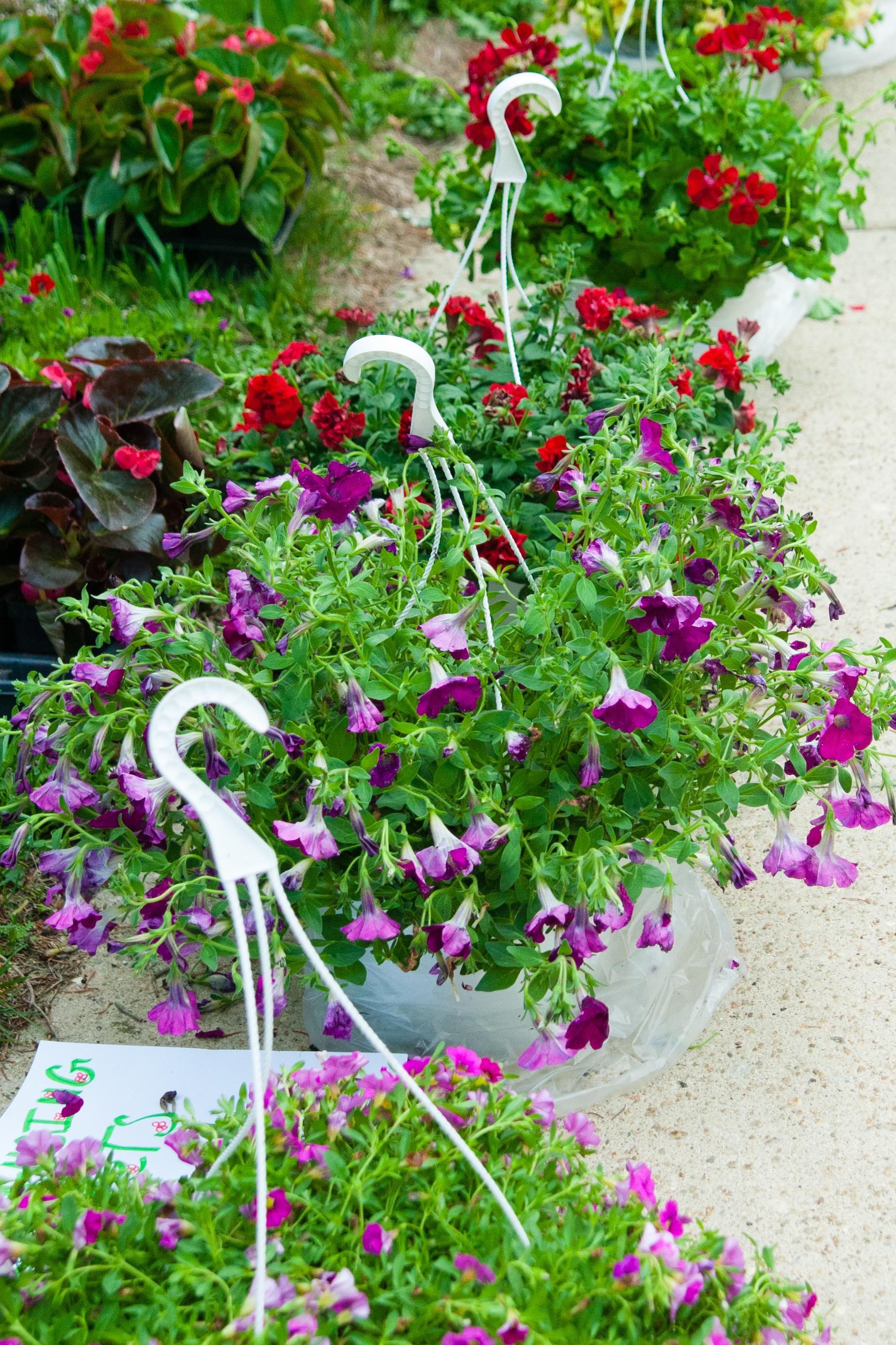 Plant Sale (4 of 8).jpg