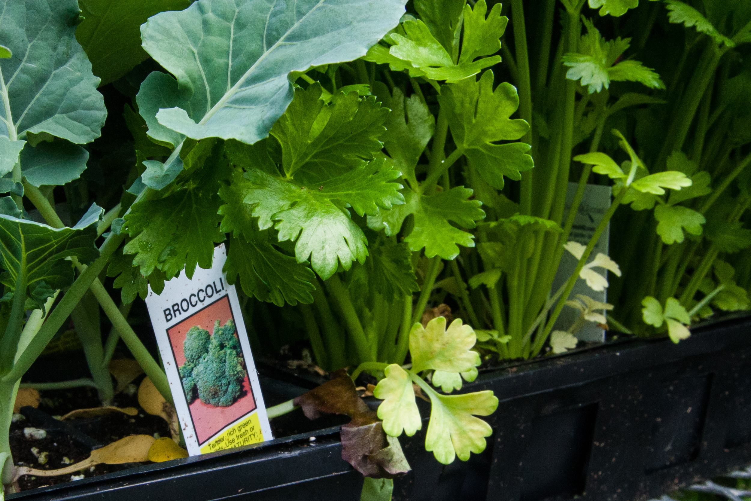 Plant Sale (6 of 8).jpg