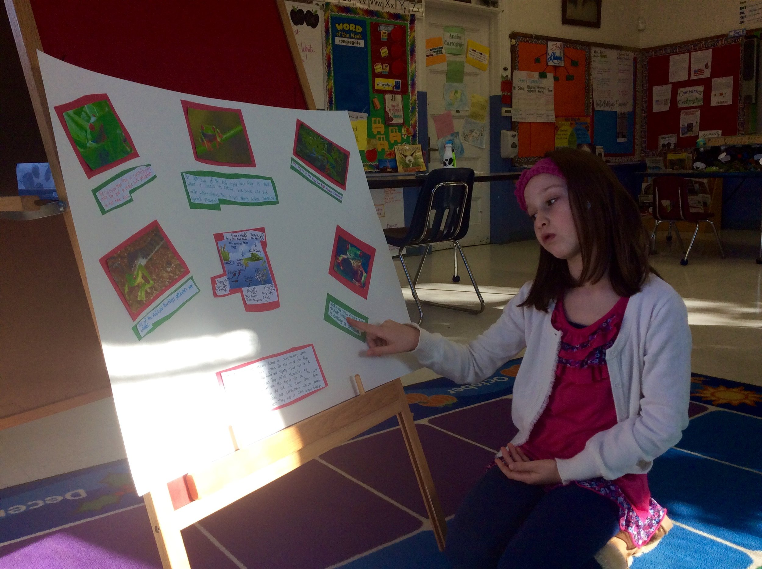 Caroline explains the eating habits of the Red-Eyed Tree Frog
