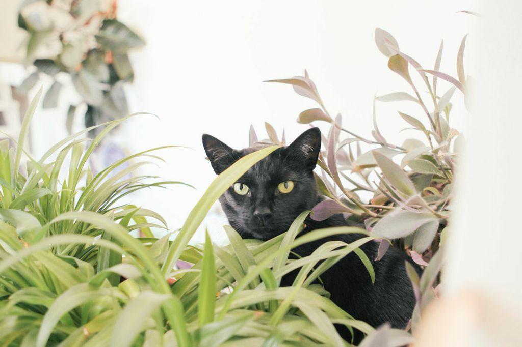 waiting for saturday : jessica barensfeld cat
