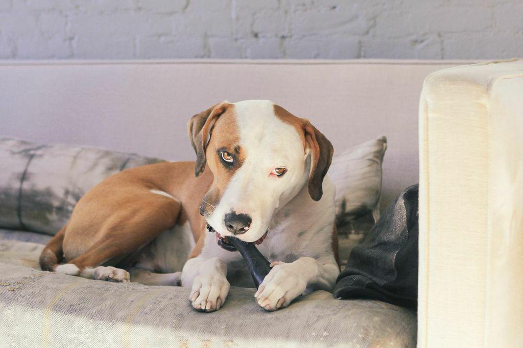 waiting for saturday : emily johnston dog