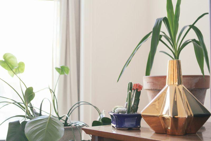 claudia cifu : apartment waiting for saturday
