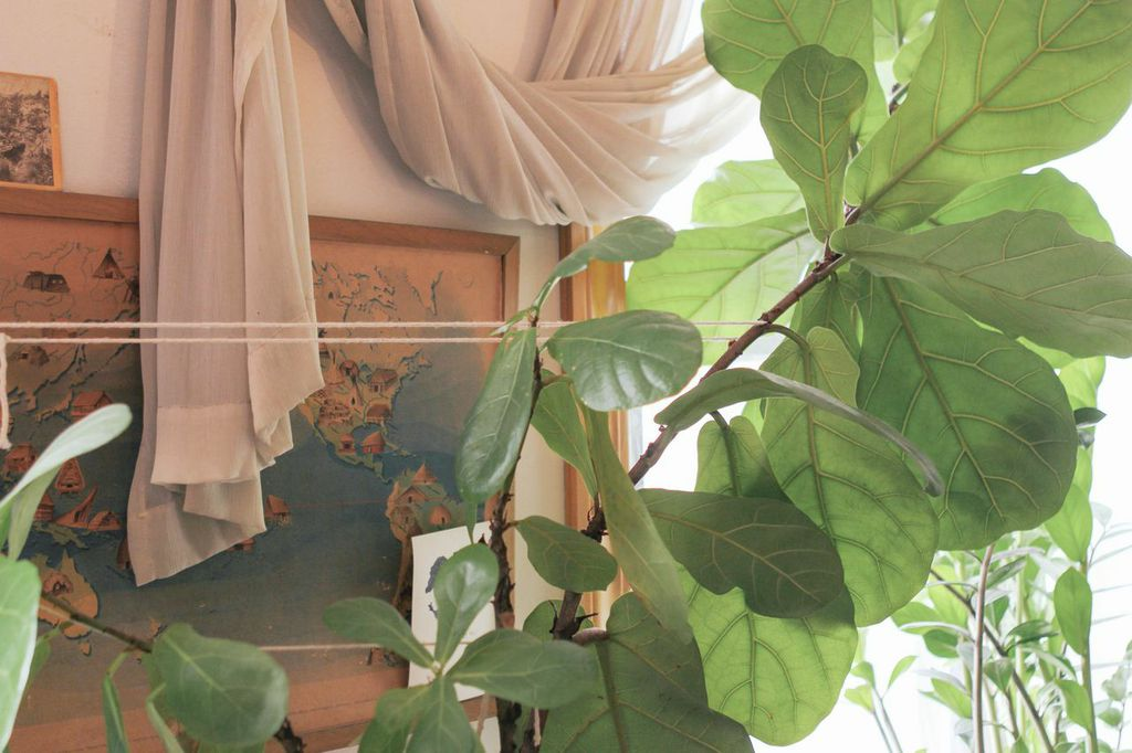 waiting for saturday : fig tree decor