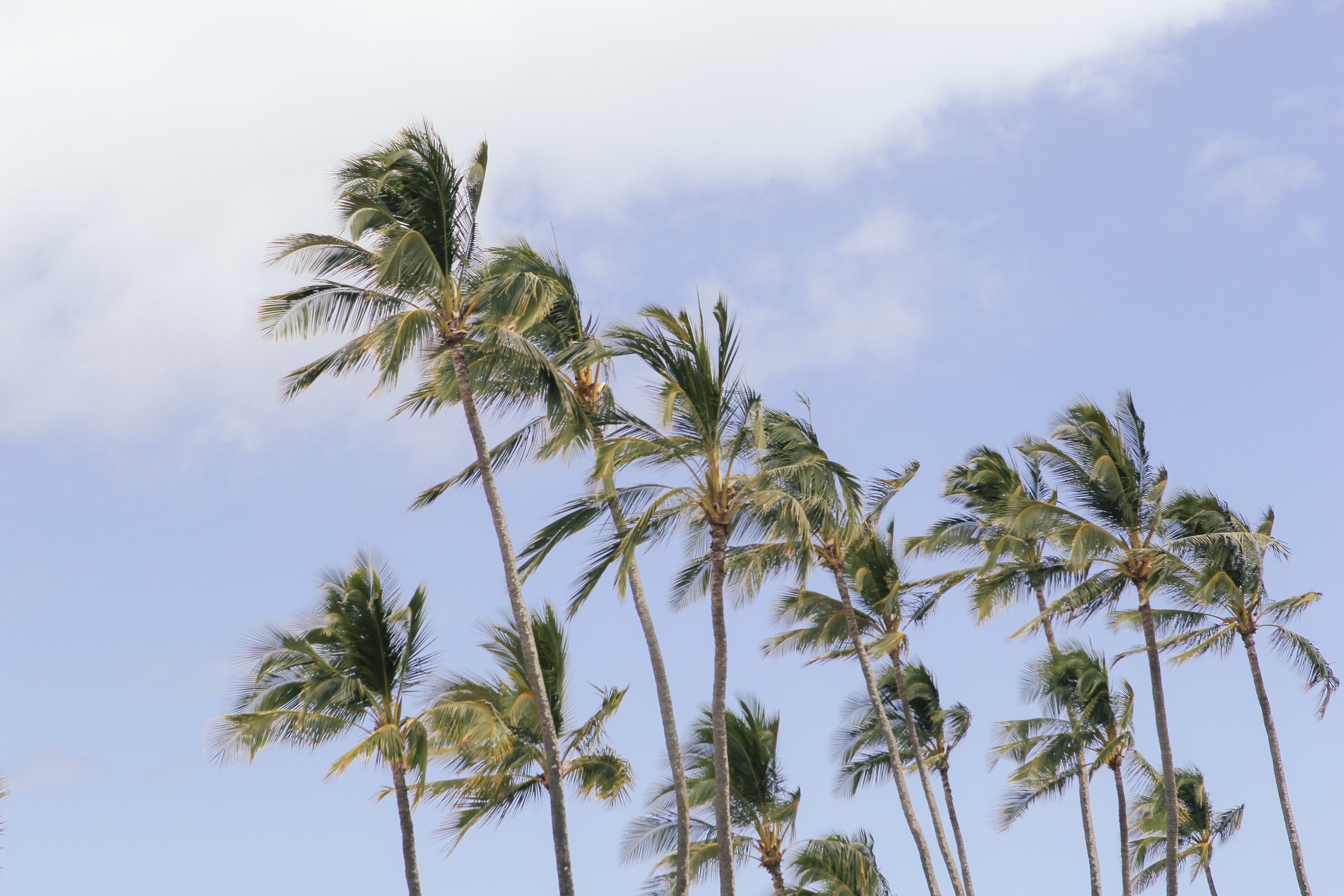 waiting for saturday : hawaii oahu north shore