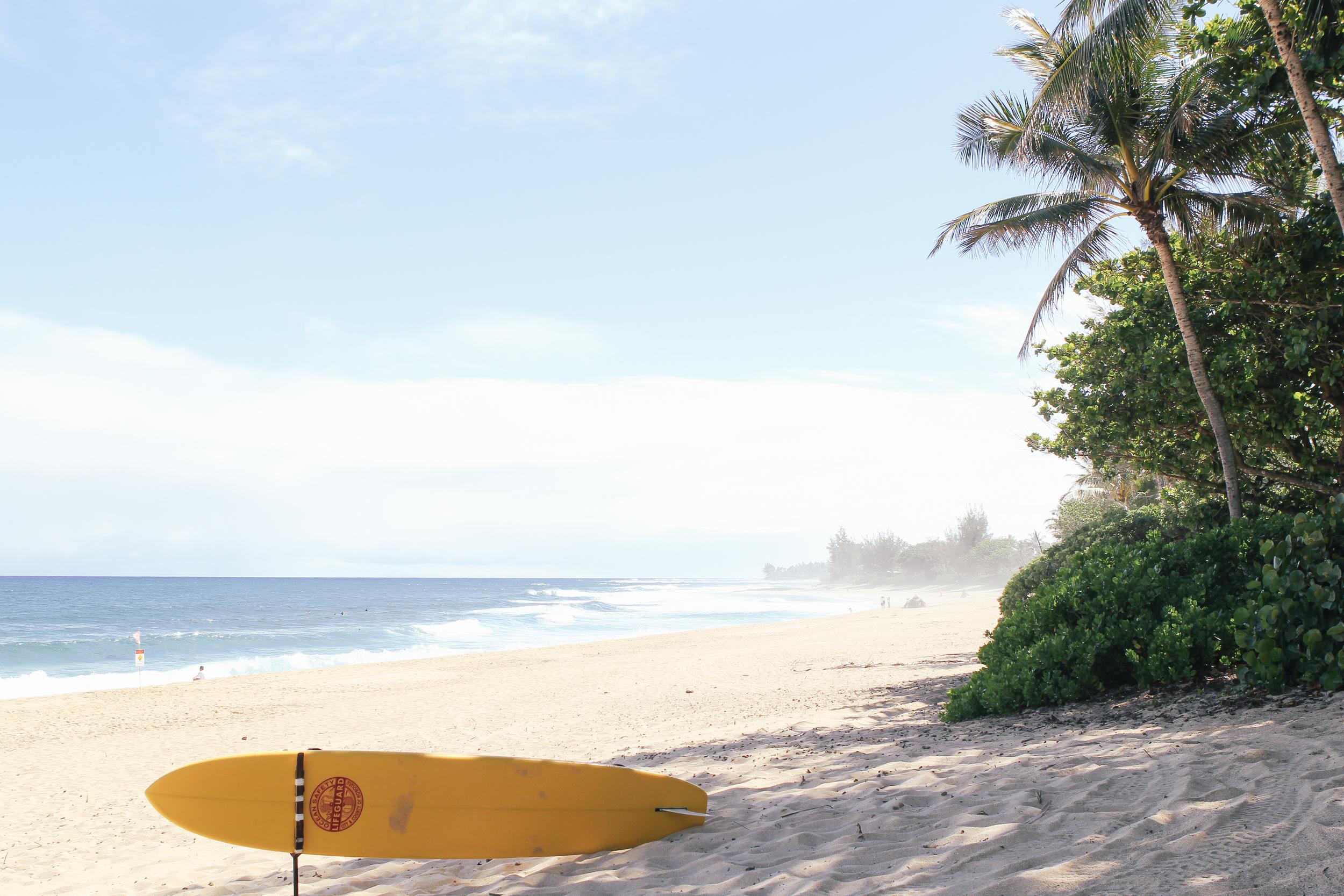 hawaii beach : waiting for saturday : surfboard