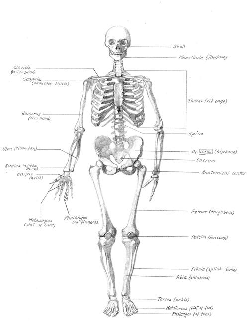 Skeleton-framed.jpg