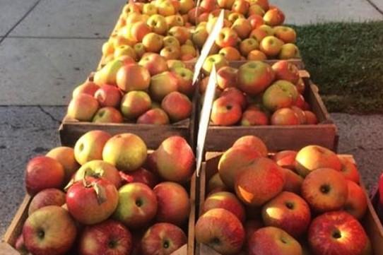 apples cville.jpg