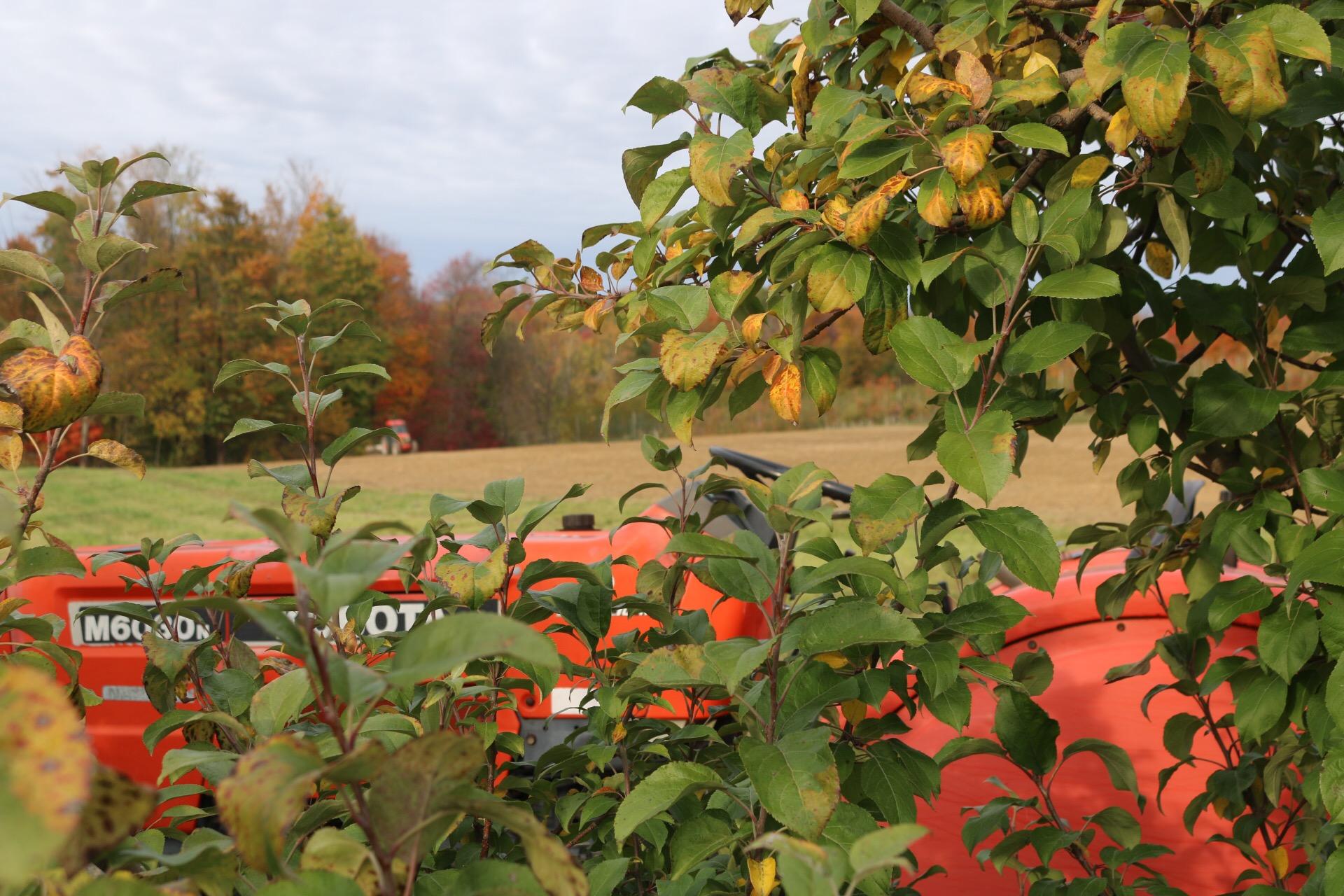 orchard19.JPG