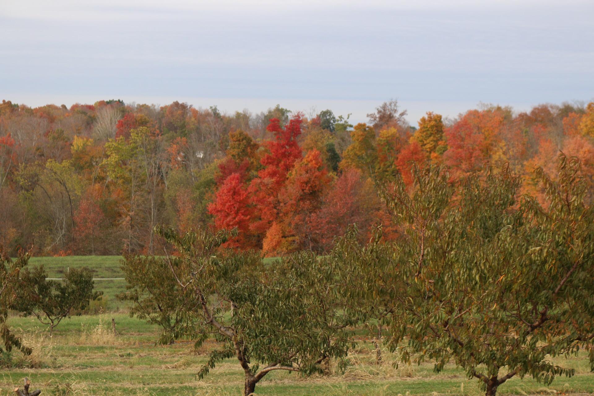 orchard12.JPG