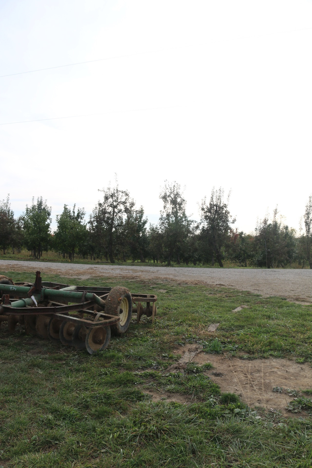 orchard11.JPG