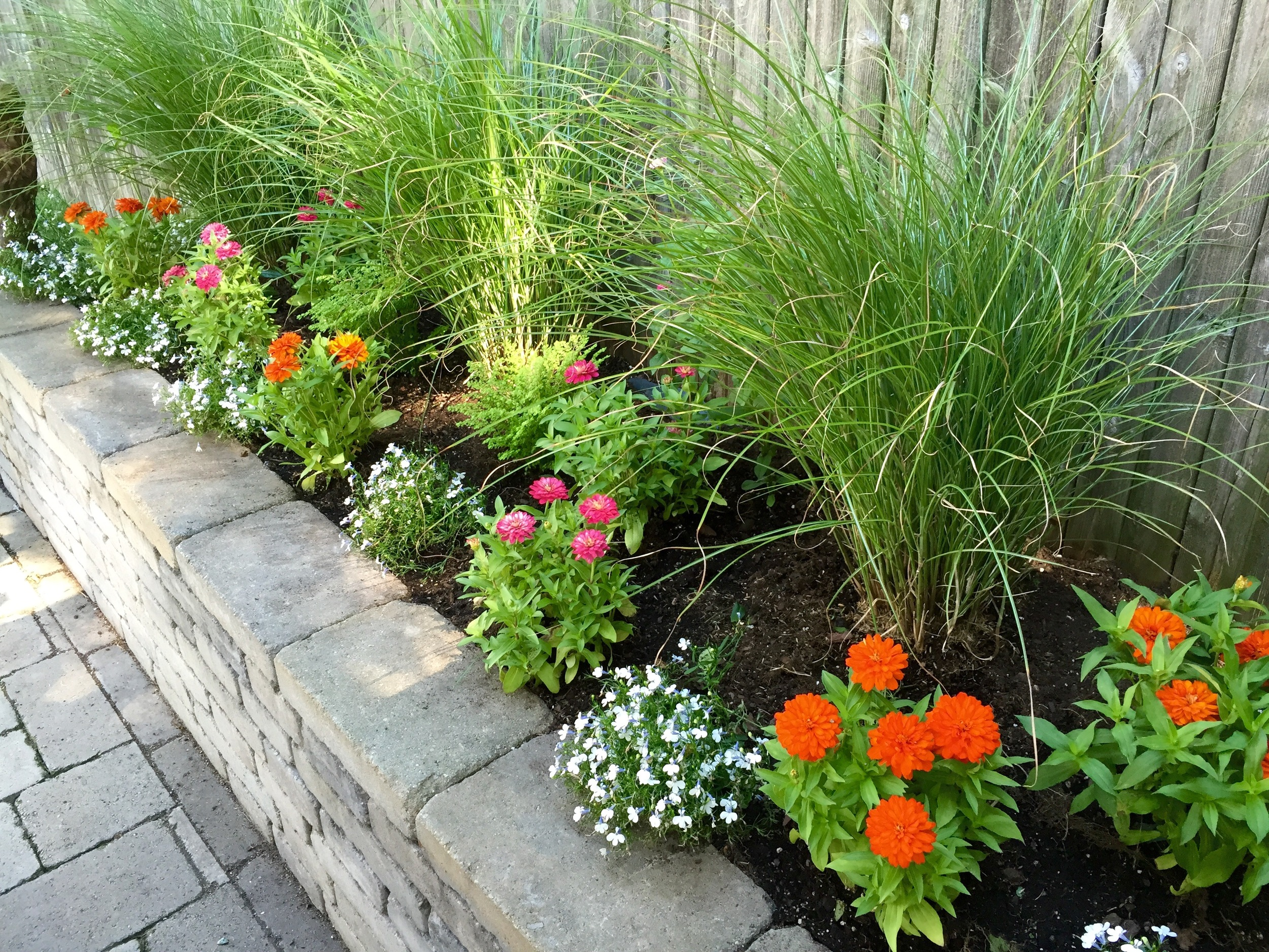 """Raised beds with beautiful, """"clean"""" grasses which blow in the wind and colorful annuals to give a pop of color behind the couch."""
