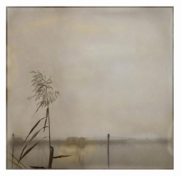 Reed (2004/2006), 40cm x 40cm, archival pigment print on fine art paper