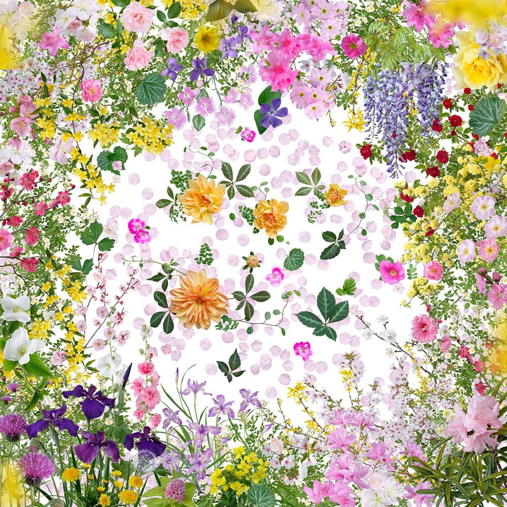 """© Katsuhiro Noguchi, """"Fukushima flower"""" (福島の花) series"""